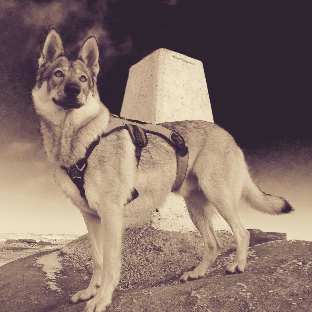 Welcome to 'The Wolfdog Blog' (1/2)